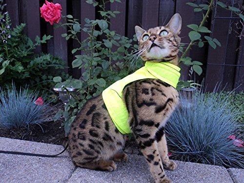 Mynwood Cat Jacke /Geschirre hoch Sichtbarkeit Erwachsene Katze ausbruchsicher
