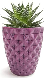 Purple Flower Pot, Orchid Pot Small 3.7 Inch Ceramic Cactus Plant Container, Aloe pots, Indoor Home Decoration Modern Planter by Forward