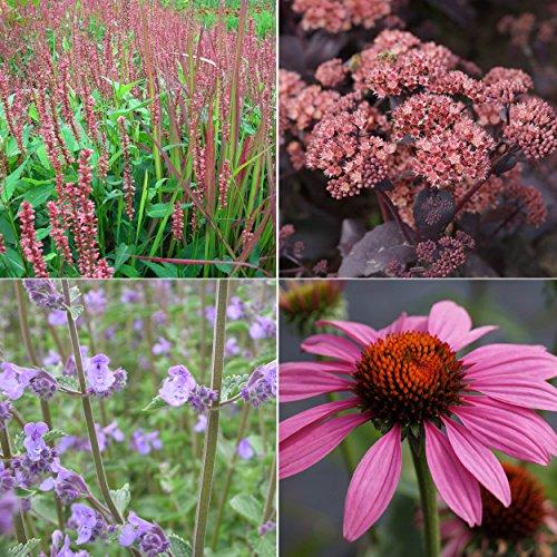 Blumixx Stauden Staudenpaket für Bienen 12 Pflanzen