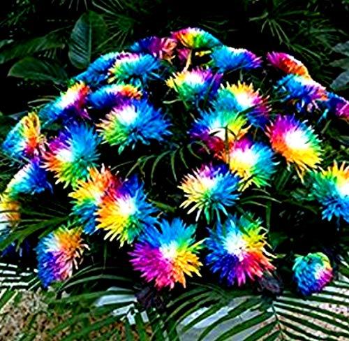 Gartensamen SummerRio 100 Stück
