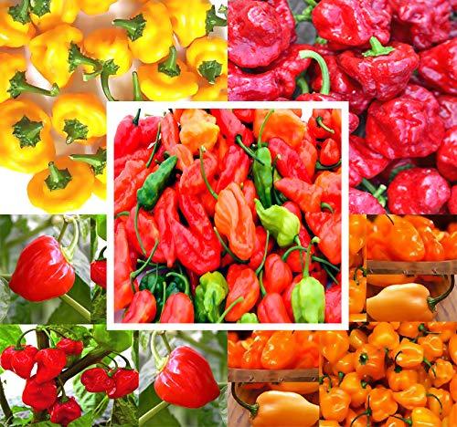 BIG PACK - (500+ Seeds) Hot Pepper Combo I - Bhut Jolokia Ghost Pepper, Habanero Orange, Habanero Red, Jamaican Yellow, Jamaican Red Pepper Seeds- Non-GMO Seeds by MySeeds.Co (BIG PACK - Hot Pepper I)