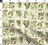 Illustration, Essen, Kräuter, Gewürz, Botanisch,