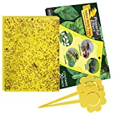 Kensizer 20-Pack Fruit Fly Trap, Yellow Sticky Gnat Traps Killer for Indoor/Outdoor Flying Plant...