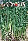 semi piante agretto o roscano toscano officinali, 2 buste linea maxi,mondonatura srl
