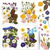 Auihiay 90 piezas de flores secas reales para resina 25 tipos de hojas de flores prensadas naturales para decoraciones artísticas