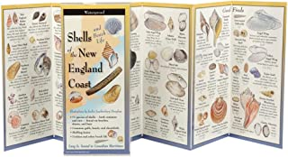 The Ultimate Guide to Shells and Beach Life of the New England Coast