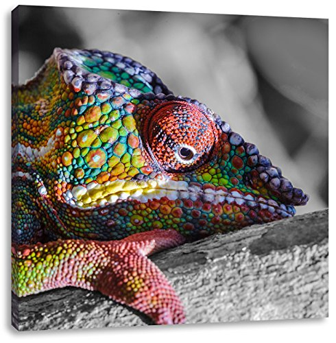 Kameleon van MadagascarCanvas Foto Plein | Maat: 40x40 cm | Wanddecoraties | Kunstdruk | Volledig gemonteerd