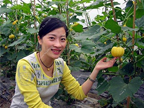 Graines de citrouille rares Cucurbita fil d'or de citrouille non-OGM légumes jardin Bonsai plantes ornementales semences Escalade 10 Pcs/sac 10