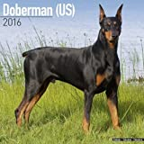 2016 Doberman calendar
