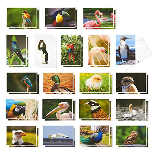 40 Pack Bird Postcards Variety Pack - Including Flamingo; Toucans; Peacock; Swan - Self Mailer Mailing Side Postcards 20 Different Image Designs - 4 x 6 Inches