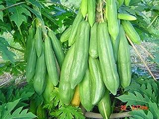 Best papaya tree seed Reviews