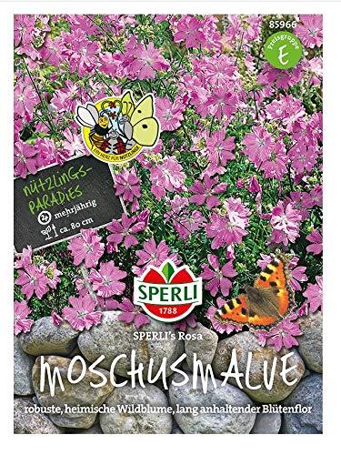 Malven (Moschus Malven) SPERLING`s Rosa, robuste heimische Wildblume, lang anhaltender Blütenflor