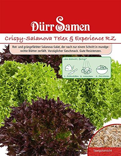 Dürr Samen 4251 Crispy-Salanova Telex + Experience (Salatsamen)