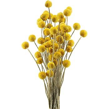 Amazon Com Lavenda Natural Dried Flowers Large Billy Balls Decorative Floral For Home Decoration 20 Pcs Yellow Furniture Decor