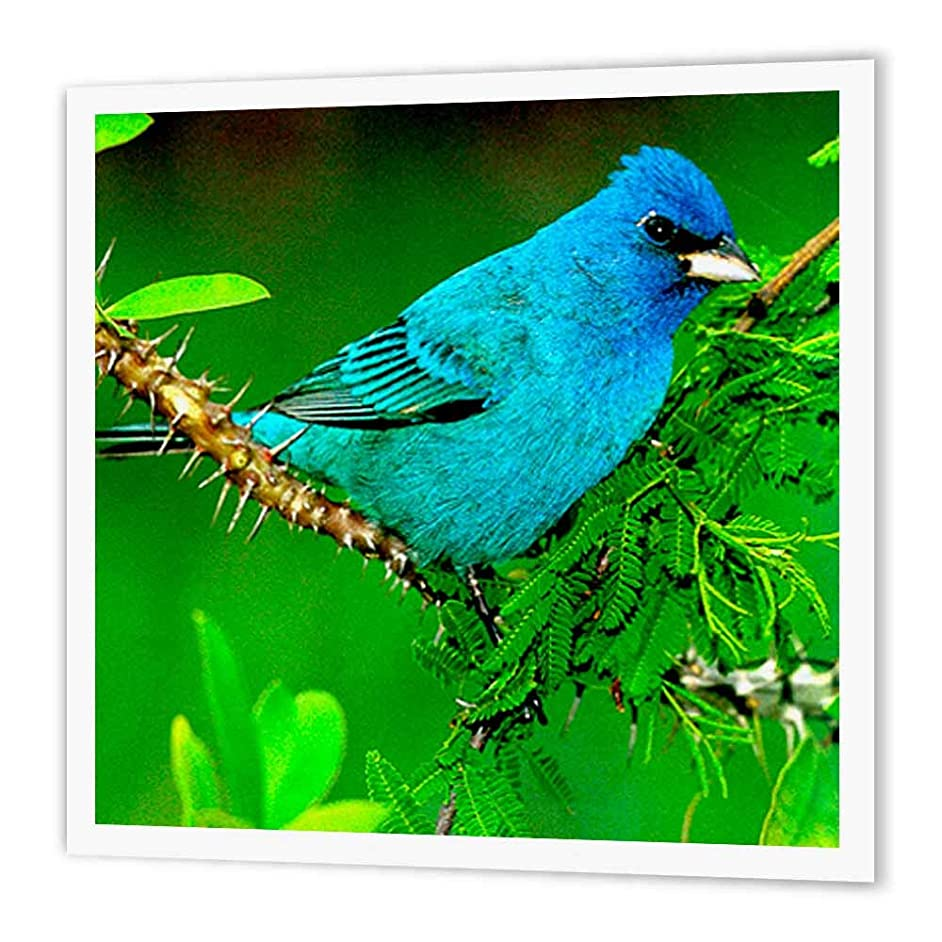 3dRose ht_708_2 Indigo Bunting-Iron on Heat Transfer Paper for White Material, 6 by 6-Inch