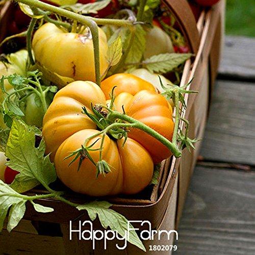 Big Sale! 100 Graines / Sac Comme Pumpkin tomate semences Balcon Fruits semences Légumes en pot Bonsai Graines Tomates, # EE4OWD