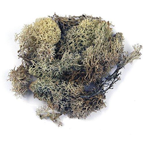 Rayher Muschio Islandese, Naturale, Busta 100 g