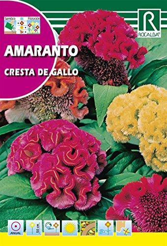 Rocalba s-620066Semilla Pera Cresta Gallo-10Pezzi