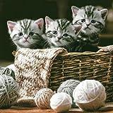 20 Servietten Niedliche Katzen im Korb / Tiere / Tiermotiv 33x33cm