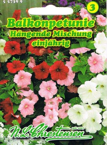 Balkonpetunie \'hängende Mischung\' , einjährig, wichtigste Balkon-, Beet- und Gruppenpflanze, \'Petunia pendula\' Petunie
