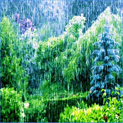 Zen Forest, Zen Rain & Zen Rain Forest
