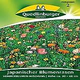 Fleur gazon japonais Mélange de fleurs d'été   Hauteur env. 30cm–Fin de Juin–Octobre
