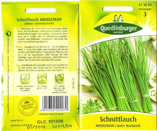 Schnittlauch Middleman (feinröhrig)