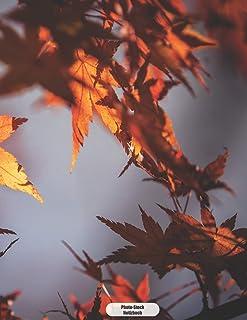 Photo-Stock Notizbuch: Herbstlicher Roter Ahorn  Tagebuch Journal 150 Seiten liniert | Notizbuch im A4 Format | mattes Softcover