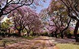 BJLWTQ Jigsaw Puzzles for Adult Puzzle Classic Jigsaw Puzzle 1000 Piece DIY Sakura Trees Lining The Street Wooden Puzzle Modern Home Decor Festival Gift Wall Art 75x50cm