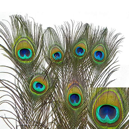 PEACOCK Natural Feather Cat Toy 6 Pack