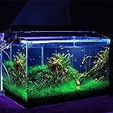 Simbr - Luces LED para acuarios y estanques,...