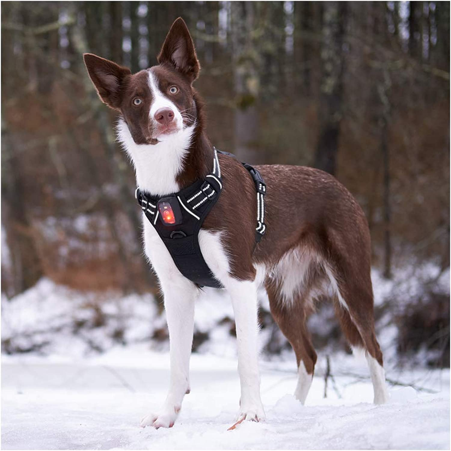 Rabbitgoo LED Dog Harness  USB Rechargeable  Illuminated No Pull Dog Vest Harness, Reflective Safety Pet Vest for Large Dogs  Adjustable, Comfort Padded, Easy Control (Black, Large)