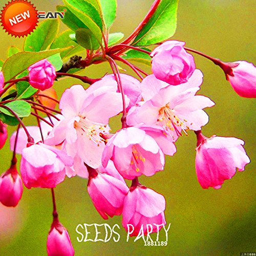 1 paquet 300pcs graines Borago Officinalis Seed bourrache Herb Garden Vegetable Simple Sow Flower Blue Star Flower Bonsai