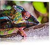 Chamäleon aus Madagaskar, Format: 80x60 auf Leinwand, XXL