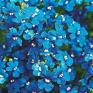 国華園 種 花たね ネメシア ブルー 1袋(50mg) 第4種郵便 /21年秋商品