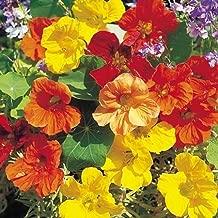 Nasturtium Tall (Single Blend) Flower Seeds, ON Sale!, 75+ Premium Heirloom Seeds, (Isla's Garden Seeds), 99.78% Purity