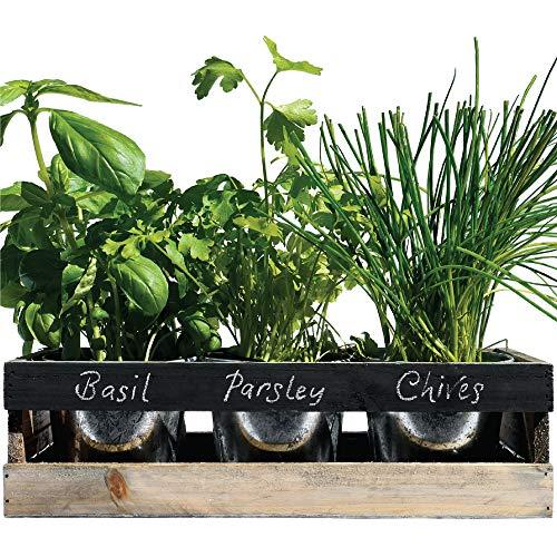 Viridescent® DIY Indoor Herb Garden Kit To Grow Your Own Herbs - 3 x...