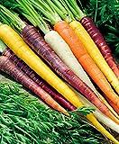 Keland Garten - Rarität Bio Sommermöhre 'Rainbow Mix F1' Gemüsesamen
