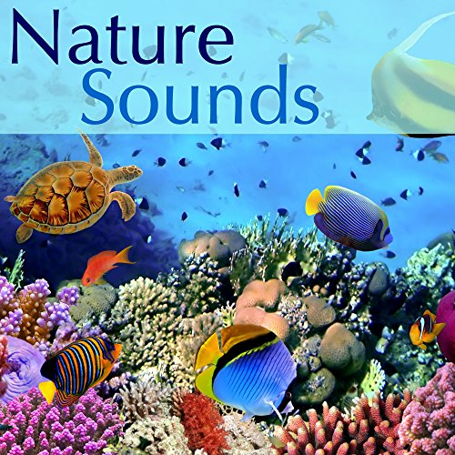 Nature Sounds Long Waterfall - River Stream, Gentle Rain Sounds and Birds Singing in the Morning, Natural Sleep Aid Relaxing Music Sleep, Water Sound, Natural Sounds and Relaxing Sounds of Nature