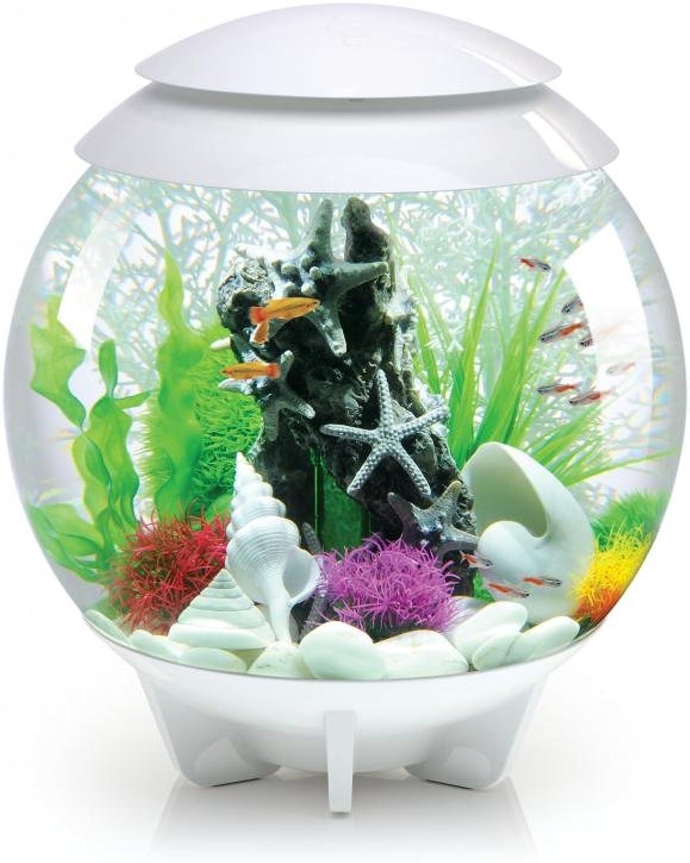 BiOrb Halo Coldwater Fish Tank, 30 Litre, White