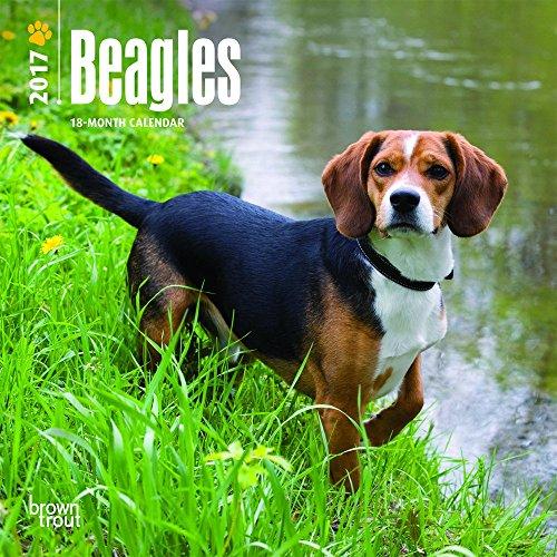 Beagles - 2017 Mini Calendar 7 x 7in