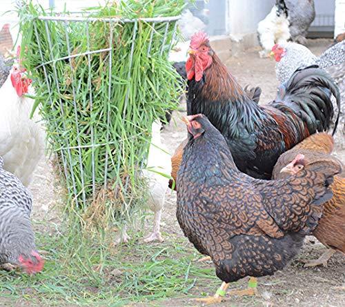 FINCA CASAREJO Comedero para gallinas y Otras Aves antiestres. Cesta galvanizada para Hierbas antiestres.