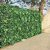 CHZSDCP Plante Artificielle Haie Artificielle Feuilles Plantes Faux Mur De Lierre 10'X10 en Plastique Jardin Vertical Preuve UV Vie Privée Backyards Décorations De Mariage