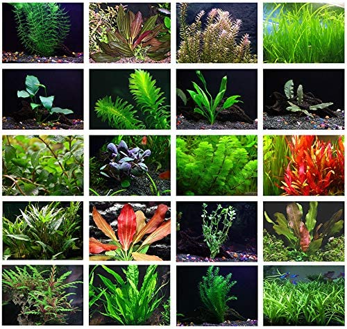 Texas Aquarium Plant Bundle - 20 Species Live Aquarium Plants Package