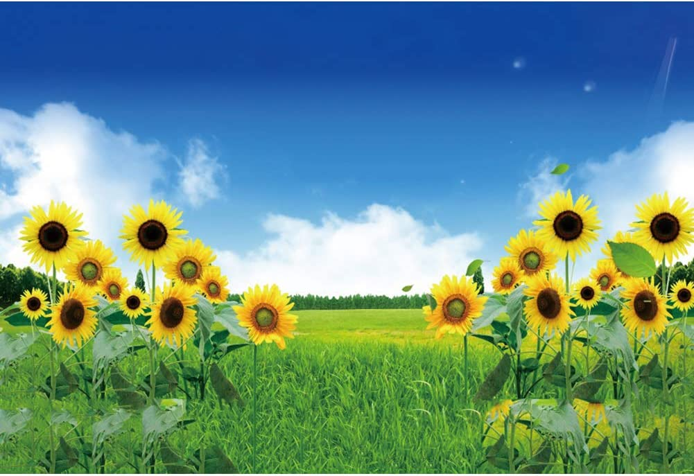 DaShan 8x6ft Polyester Sunflower Backdrop Fall Wedding Autumn Foliage Party Decor Sunflower Party Photography Background Fall Thanksgiving Autumn Harvest Party Outdoor Kid Baby Birthday Photo Props