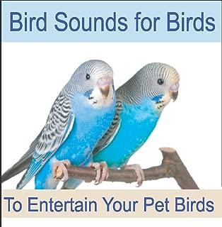 Best cockatiel bird sound mp3 Reviews