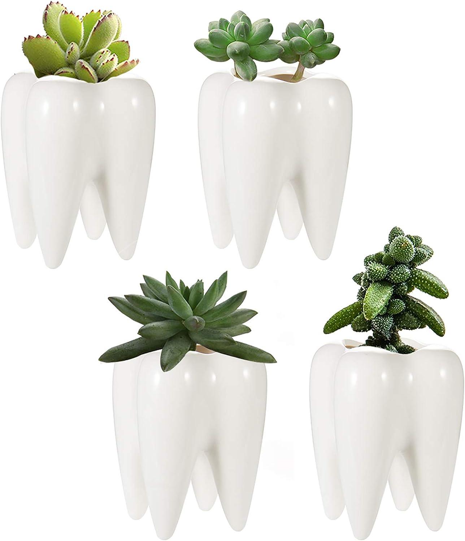 Succulent Planter Luxury ZOUTOG Tooth for Decor Home Ceramic Over item handling