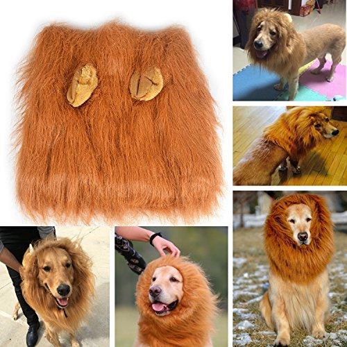 Hunde Löwen Mähne