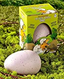 Set of 2 Ginormous Hatchin' Grow Dino Eggs