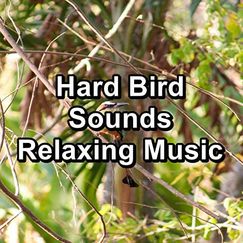 Calming Bird Sounds, Relax Bird Sounds & Sounds and Birds Song